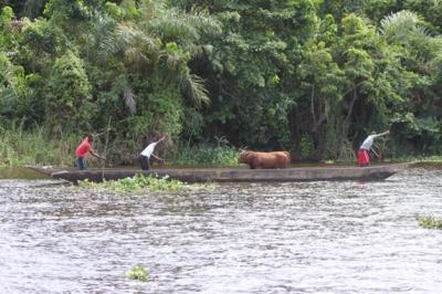das beste Beförderungsmittel im Kongo, ein Kanu
