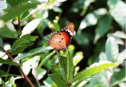 Madagaskar Nationalparks: Schmetterling