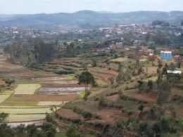 Reisfelder um Ambositra
