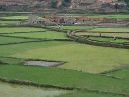 Reisfelder zwischen Andasibe und Antananarivo