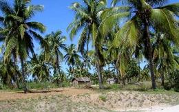 Palmen in Mosambik - www.roundtheearth.de