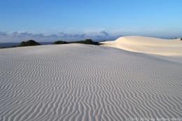 Dünenlandschaft im De Hoop Nature Reserve