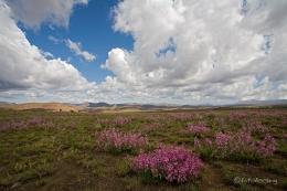 Südafrika an der Panoramaroute
