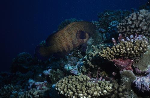 Wassersport ist vor den Komoren ganz groß