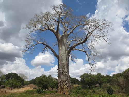 Typische Landschaft in Mosambik
