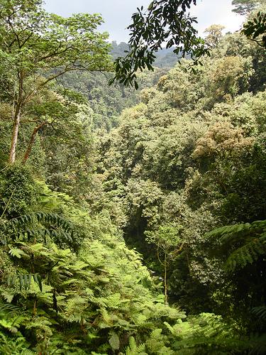 Regenwald mitten in Ruanda
