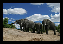 Elefantenherde, Südafrika ©Christian Heinrich   www.fotofeeling.de