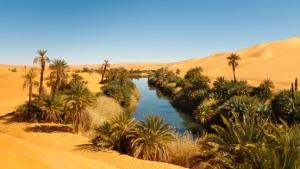 Oase - Sahara - Wüste - Afrika