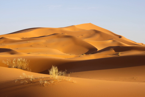 Sahara - Wüste -Dünen
