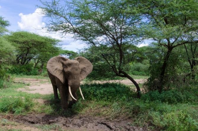 Südafrika - Reisen - Elefant