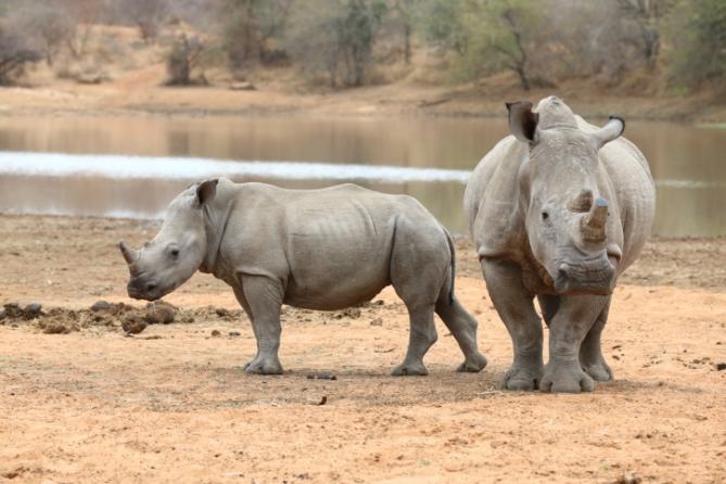 Südafrika - Reisen - Nashörner