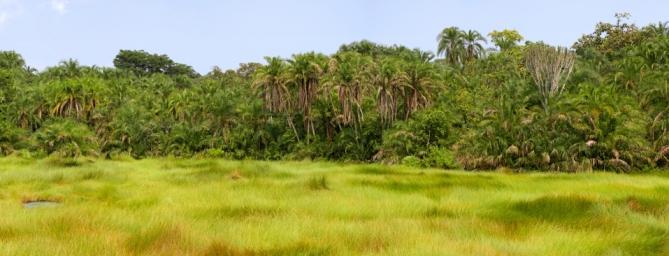 Guinea - Reisen - Reegenwald