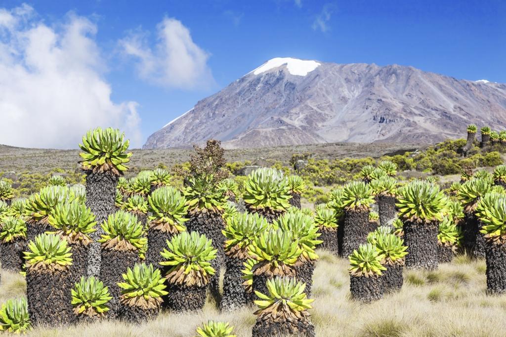 Tansania - Reisen Kilimanjaro