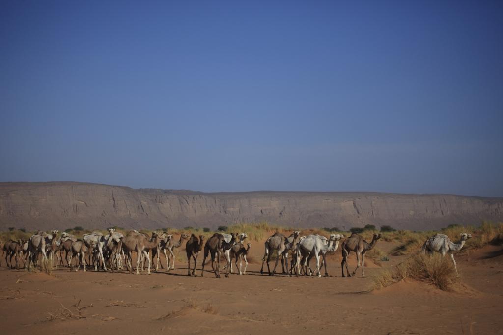 Niger - Reisen - Krankheiten