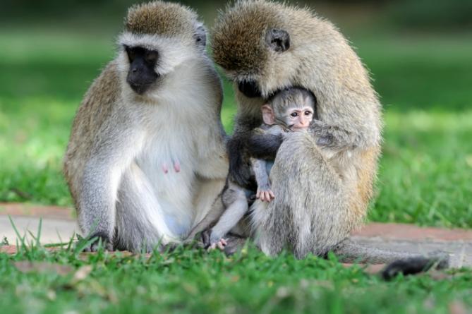 Südafrika - Reisen - Tiere