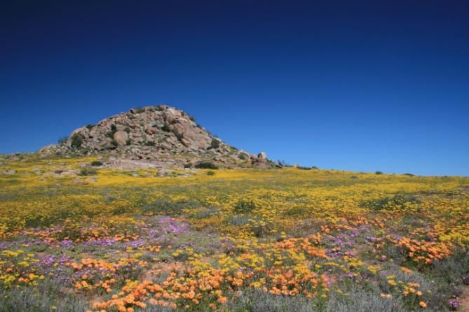 Südafrika - Reisen - Wildblumen