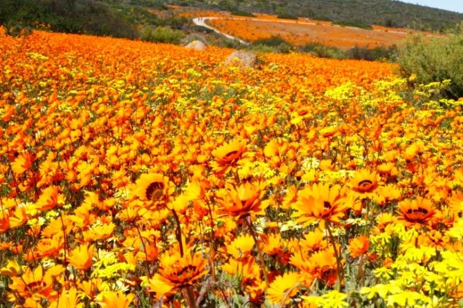 Südafrika - Reisen - Namaqualand