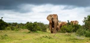 Sierra Leone - Reisen - Elefanten