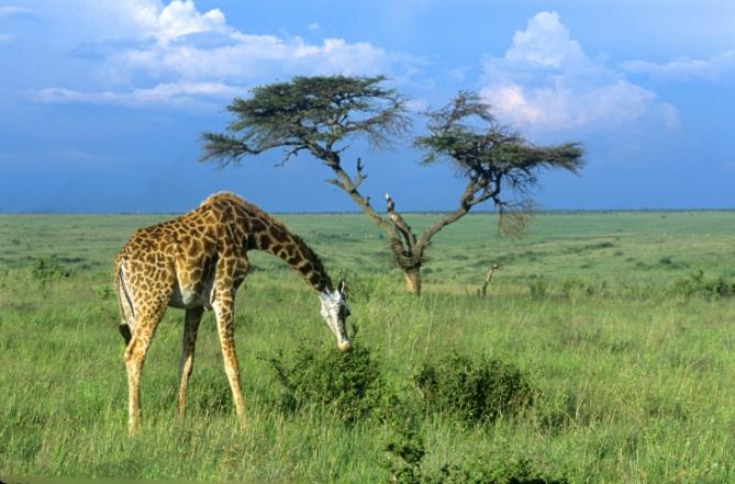 Tansania - Reisen - Schutzgebiete