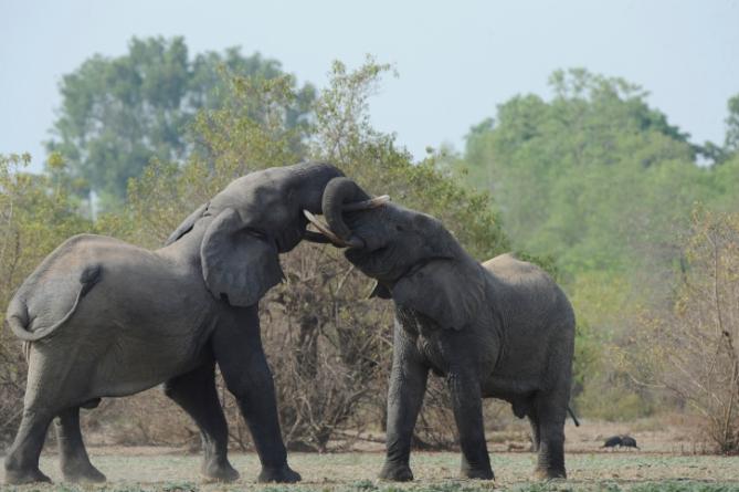Ghana - Reisen - Mole Nationalpark
