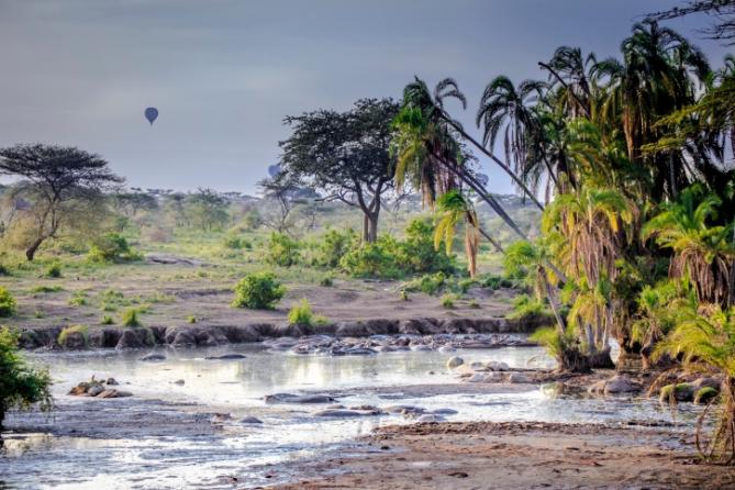 Tansania - Reisen - Flusspferde