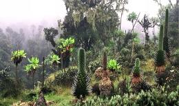 Uganda - Reisen - Landschaft