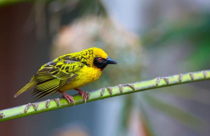 Gambia - Reisen - Vogelvielfalt