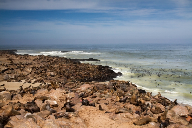Namibia - Reisen - Cape Cross