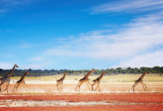 Namibia - Reisen - Etosha-Nationalpark
