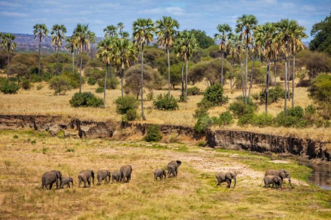 Tansania - Reisen - Elefanten