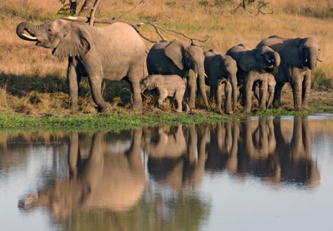 Elefanten - Südafrika - Reisen