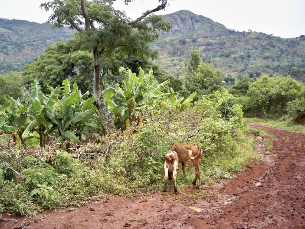 Tansania-Reisen Usambara Gebirge