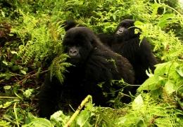 Uganda - Reisen - Bwindi Forest