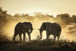 Foto Safari in Afrika: Elefanten, Südafrika