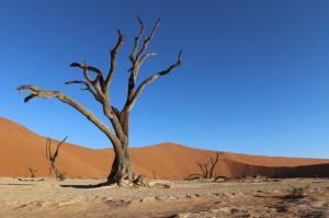 Sossusvlei - Namibia Safari-Reise