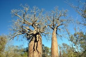 Madagaskar Reisen mit natuerlich-afrika.reisen