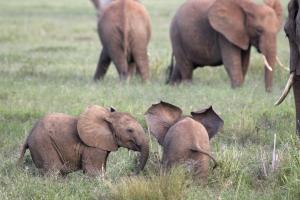 Kenia Gruppenreisen mit touring-afrikia.de- Tsavo West Nationalpark