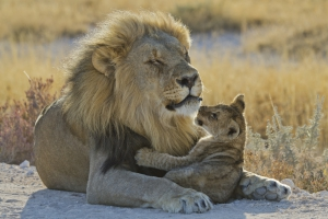 mit natuerlich-afrika.reisen Namibia Individualreisen zum Mudumu Nationalpark