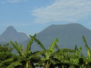 Volcanoes Nationalpark-Ruanda mit natuerlich-afrika.reisen- Ruanda Reisen
