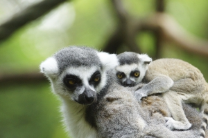 Besuch des Tsingy de Bemaraha Nationalpark-Madagaskar mit natuerlich-afrika.reisen