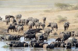 natuerlich-afrika.reisen/reisebericht Tansania