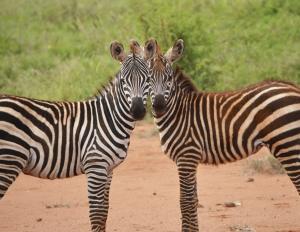 Tsavo Ost Nationalpark-Kenia Individualreisen mit natuerlich-afrika.reisen