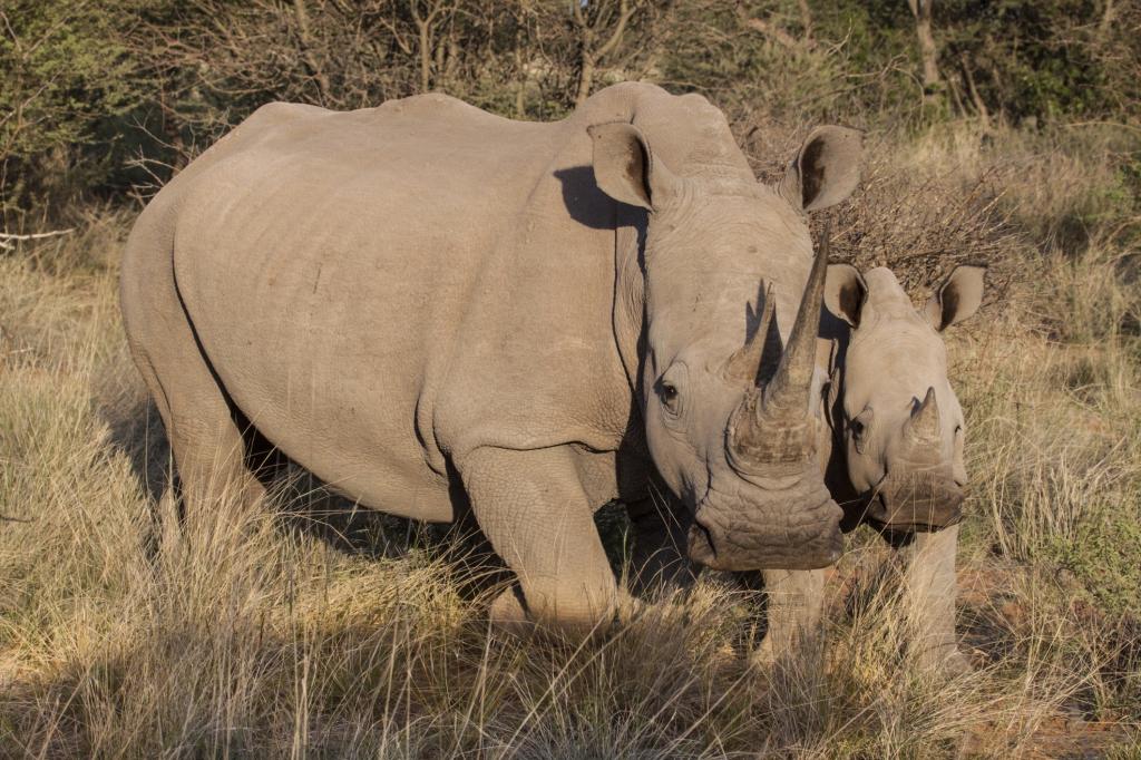 Kenia Reisen und Safarim mit natuerlich-afrika.reisen