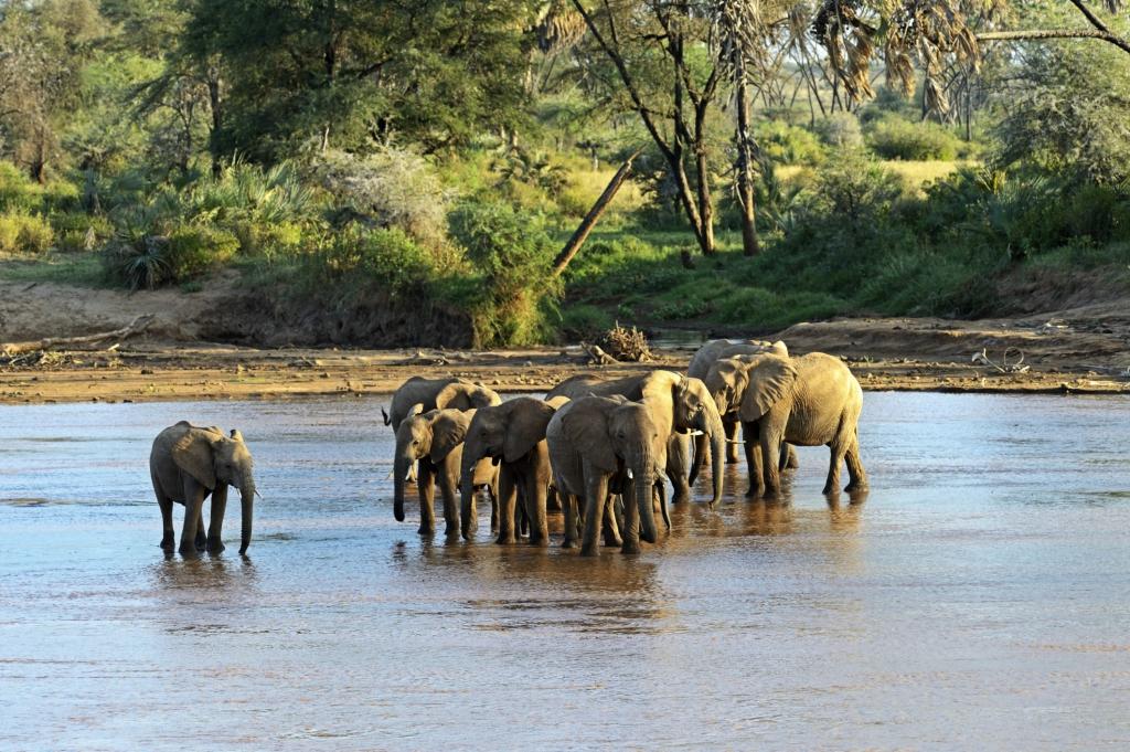 Kenia Reisen mit natuerlich-afrika.reisen- auf Big Five Kenia safari