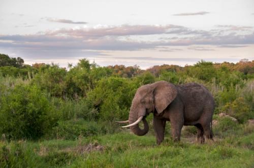 Südafrika Reisenh mit touring-afrika