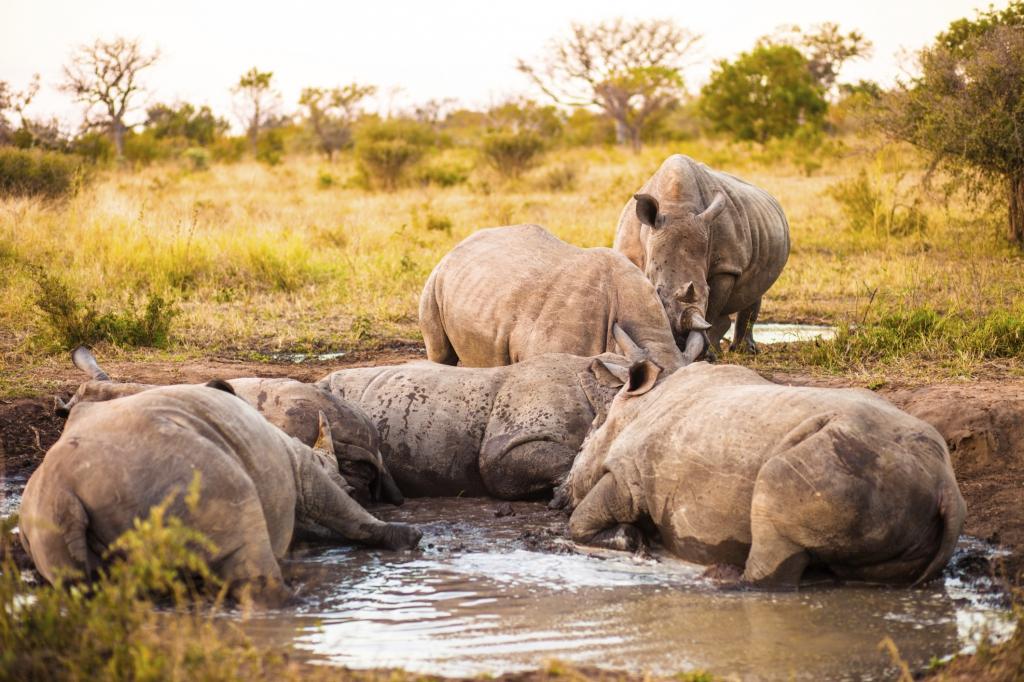 Reisebericht Südafrika - Selbstfahrer Rundreise Südafrika