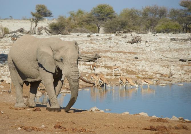 Elefant am Wasserloch, Ökotourismus Namibia
