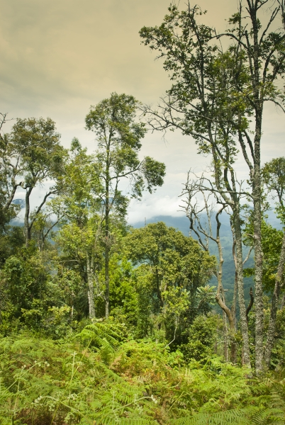 Nyungwe Forest Ruanda