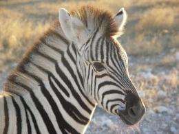 Namibia - Safari - Reisebericht