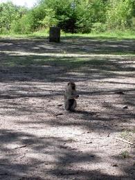 Affe - Botswana - Reisebericht